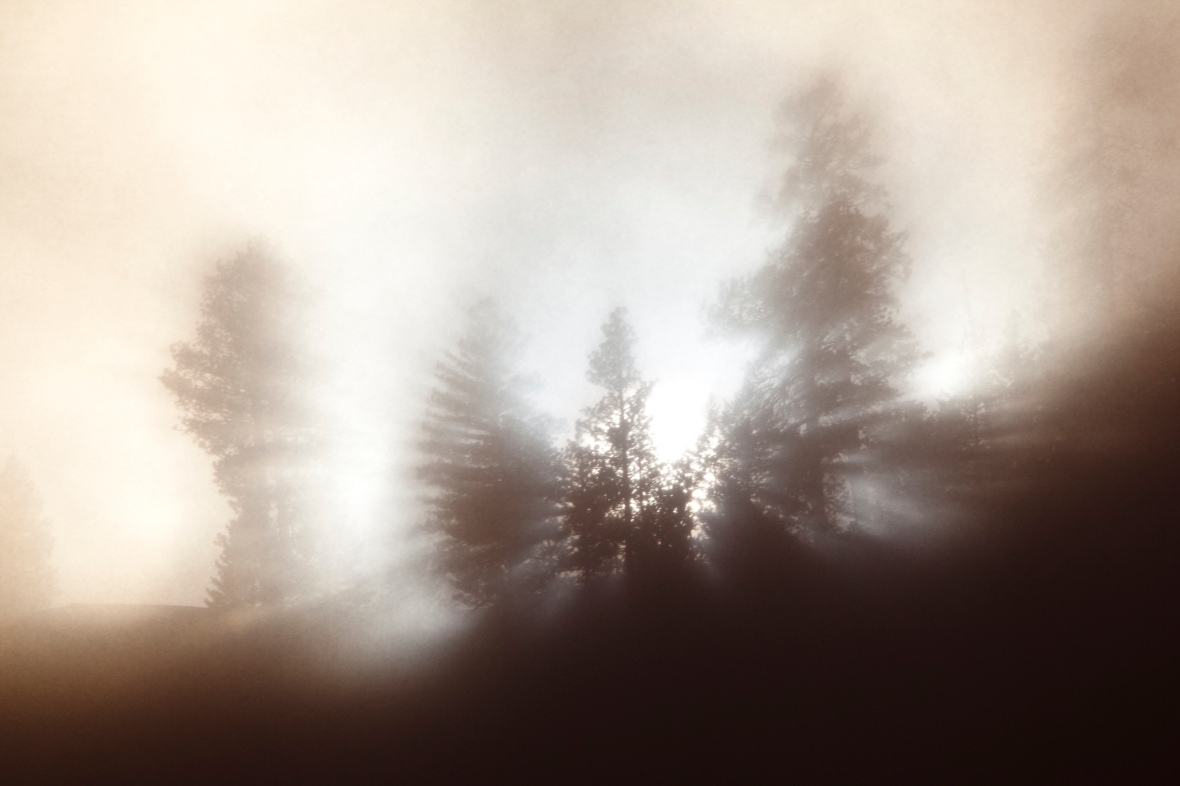 The fog, the sun, and the trees